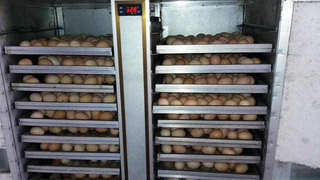 Các tham số ảnh hưởng tới việc ấp trứng